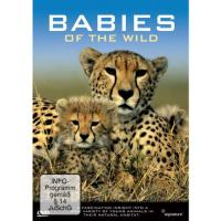 Babies Of The Wild  Babies Of The Wild